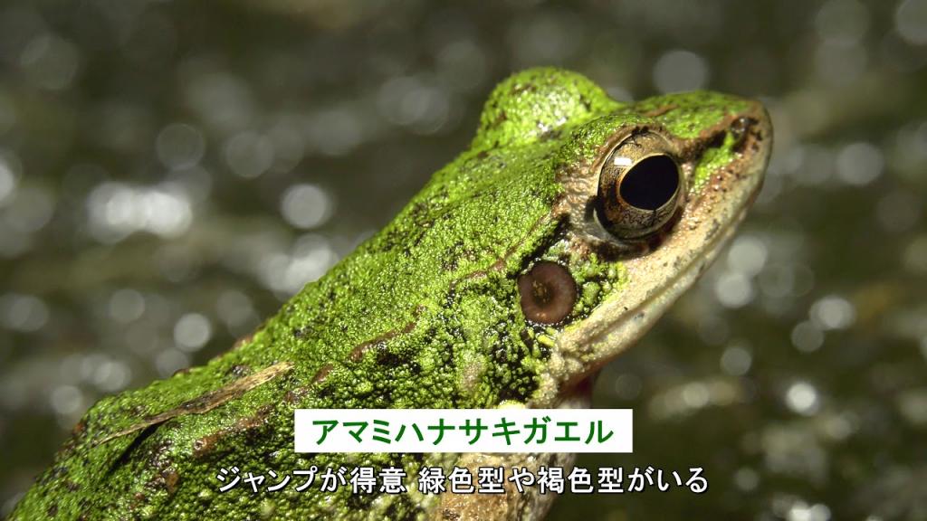 自然を体感「奄美大島のエコツアー」